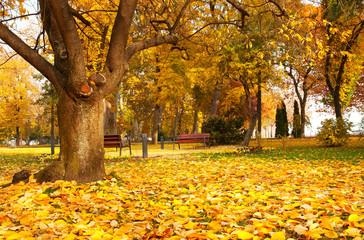 Beautiful autumn park in a rainy day at Lake Balaton,Hungary