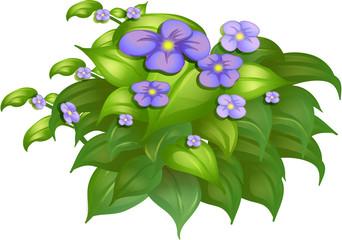 A flower plant