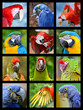 Twelve mosaic photos of portrait of parots