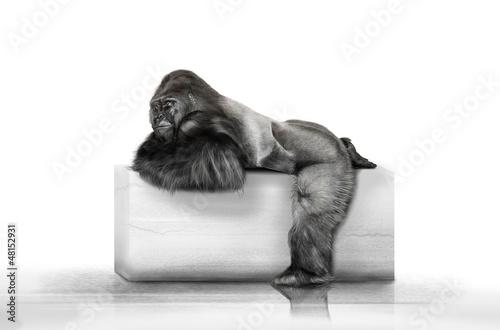 Der Gorilla auf dem Klotz