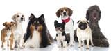 Group of dogs - Gruppe von Hunden