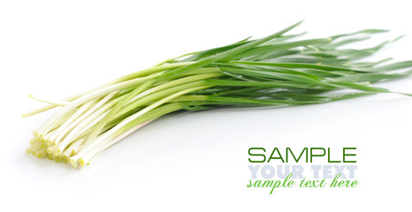 Fresh spring garlic on white background