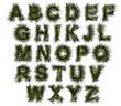 Alfabeto, agricoltura biologica, verde, ecologia, allevamento