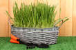 Green grass in basket near fence