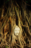 Buddha head covered by roots of a tree in Ayutthaya. Thailand