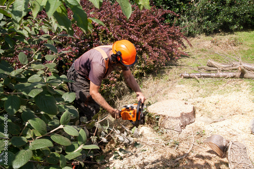 chain sawing tree trunk