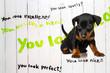 Mini Pincher puppy