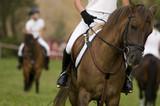 horse riding lesson - 48165784