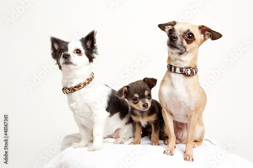 Hundefamilie