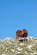 Cavallo solitario