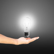Light bulb in hand business on gray background