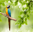 macaw parrot on a tree