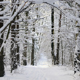 Fototapety Winter in  forest