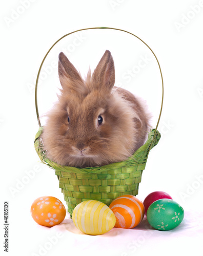 fancy rabbit in the basket