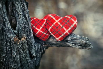 Valentine`s card with a couple of hearts on a tree.