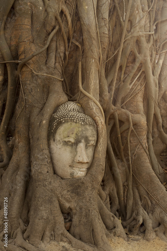 Buddha head encased in tree roots at the temple