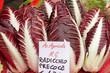 Radicchio Rosso di Treviso, variety  precoce