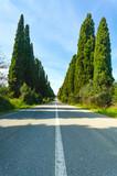 Bolgheri famous cypress tree boulevard landscape. Tuscany, Italy poster