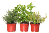 thyme, mint and lemon-thyme herb plants in pots
