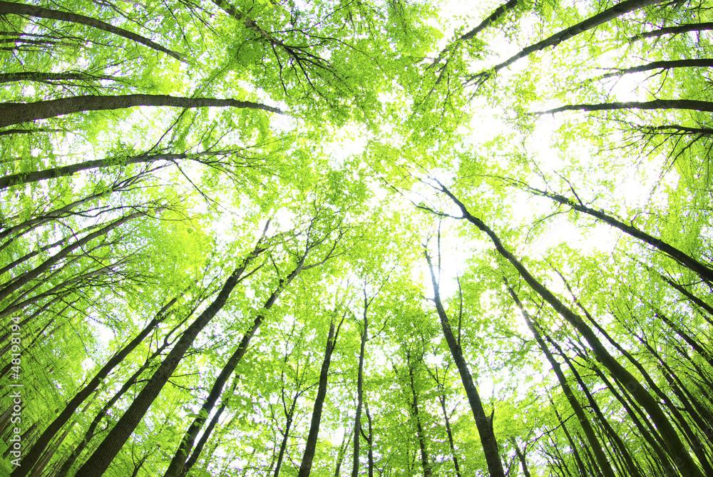 cr dence de cuisine en verre imprim green forest nikkel. Black Bedroom Furniture Sets. Home Design Ideas