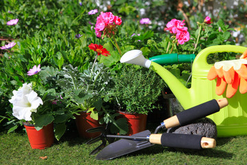 planting flowers with garden tools ,various flowers and herbs in