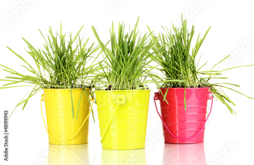 Green grass in buckets isolated on white