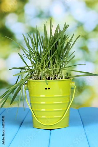 Green grass in bucket on wooden table on bright background