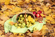 baskets of fresh ripe apples in garden on autumn leaves