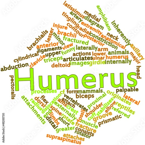 Word cloud for Humerus