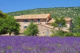 Fototapety Lavendelfeld - lavender field 27