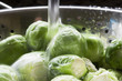 Rinsing Sprouts