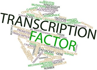 Word cloud for Transcription factor