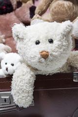 Alter runzliger Teddybär
