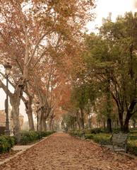 Camino con arboles en otoñp