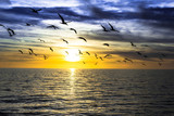 dramatic dark cloudy sunset over the ocean with flying seagulls - Fine Art prints