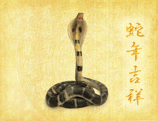 Chinese Calligraphy 2013 - words mean happy Year of the snake