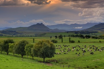 UMZIMKULU VALLEY FARM SCENE
