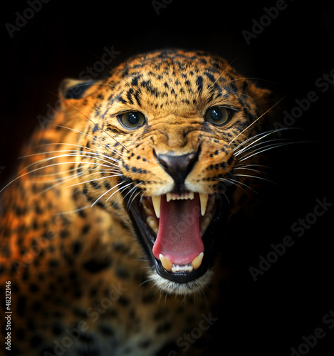 Canvas Afrika Leopard