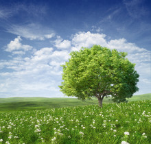 Letni krajobraz z zielonym drzewem