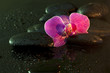 Orchid and stones in night spa concept still life