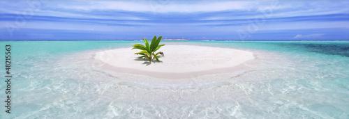 Leinwanddruck Bild Tropical island with palm