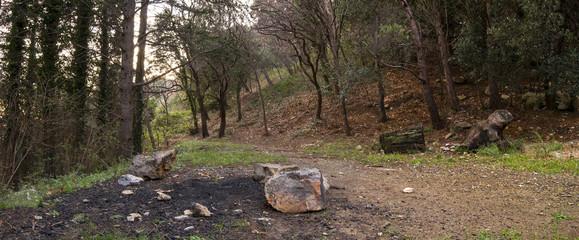 sentiero nel bosco vicino a genova