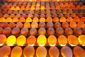 Eggs in lighting control quality in egg factory