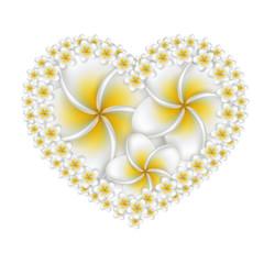 Plumeria flowers heart.