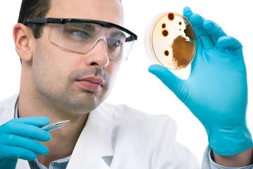 Scientist observing petri dish at the laboratory