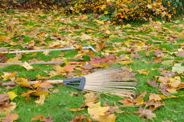 rake tools lie autumn meadow ground color leaves