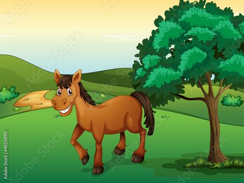 Foto op Canvas Boerderij A smiling horse