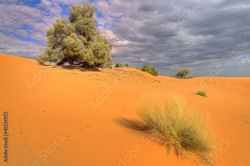 Kalahari sand dune showing adaptive desert vegetation