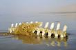 Restes d'ossements de mammifère marin pris dans un filet