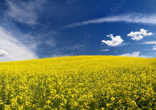 Fototapeten,himmel,raps,gelb,ländle